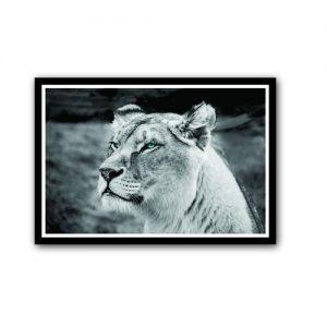 Awesome Calm Lion Wall Frame discountshub